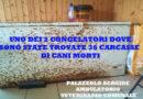 Palazzolo Acreide, macabro ritrovamento nell'ambulatorio Veterinario Comunale, 36 carcasse di cani nei congelatori. Sindaco Gallo e consulente Caligiore, denunciano il fatto.