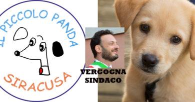 Il Piccolo Panda vince in Tribunale ed ottiene il dissequestro. La Vergogna del Sindaco Italia che da oltre 10 mesi non si chiede come mangiano i suoi 500 cani.